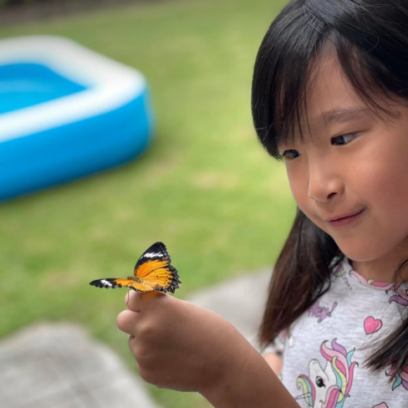 Let's learn Science: from caterpillar to butterfly